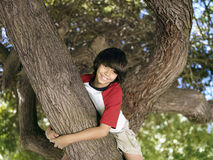 Boy (10-12) sitting in tree in park, smiling, portrait, low angle view Royalty Free Stock Photos