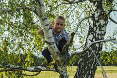 Boy sitting on a tree in the woods Royalty Free Stock Photo