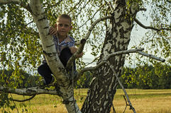 Boy sitting on a tree in the woods Royalty Free Stock Photography