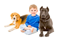 Boy sitting with two dogs Royalty Free Stock Images