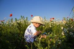 Boy sitting in wildflowers Stock Photo
