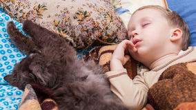 Boy sleeps with cat. Young boy and cat sleeping on bed at home Royalty Free Stock Image