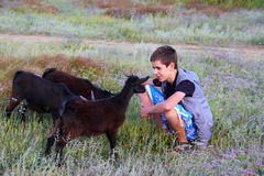Boy with small goats Stock Images