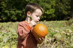 Boy with a small pumpkin. A young boy holds a small pumpkin Royalty Free Stock Image