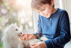 Boy with small puppy dog best friend. Boy feeding treats to his small puppy dog best friend Stock Photo