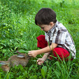 Boy and small rabbits in the garden Royalty Free Stock Image