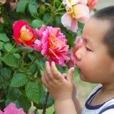 Boy smell flower stock image