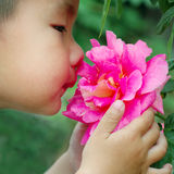 Boy smell flower Royalty Free Stock Photography