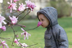 Free Boy Smelling A Flower Royalty Free Stock Photography - 41739467