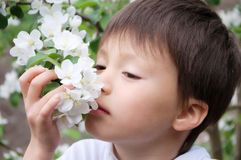 Boy smelling blossoming apple tree flowers Stock Photos