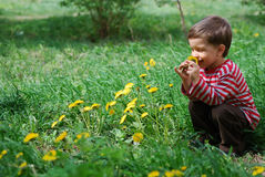 Boy smelling dandelion flower Stock Photos