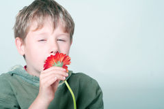 Boy smelling flower. A boy squinting his eyes while smelling a red flower royalty free stock images