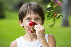 Boy smelling a flower Stock Images