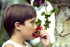 Boy smelling a flower Stock Photography