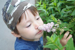 Boy smelling flower Royalty Free Stock Photography