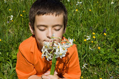 Boy smelling flowers Royalty Free Stock Photos