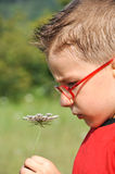 Boy smelling flowers Stock Photography