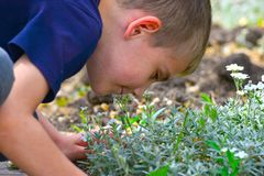 The boy is smelling flowers on a summer day in the park outside royalty free stock photos