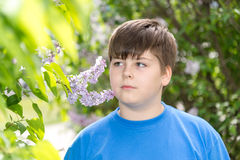 Boy smelling a lilac flowers in park Royalty Free Stock Image
