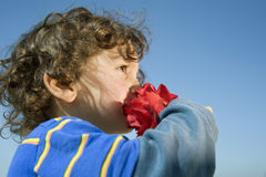 Boy smelling a red rose Stock Photos
