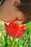 Boy smelling a red tulip Royalty Free Stock Photo