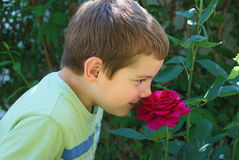 Boy smelling rose Stock Images