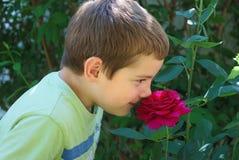Boy smelling rose Stock Images