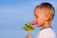 Boy smelling rose flower Stock Images