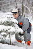 Boy is smelling spruce. The boy is smelling spruce covered with snow Royalty Free Stock Photography