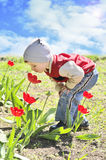Boy smelling tulips Royalty Free Stock Photography