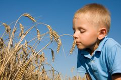 Boy smelling wheat ears Stock Photography