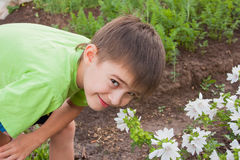 A boy smells flowers on a suburban Royalty Free Stock Photos