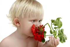 Boy smells a red flower Stock Photos