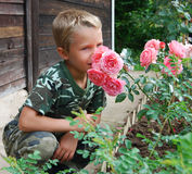 The boy smells roses. The boy on a summer residence. He squats and smells beautiful roses Royalty Free Stock Photo