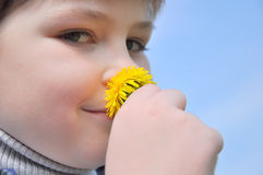 The boy sniffs a dandelion Stock Photo