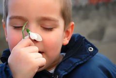 Boy and a snowdrop Stock Photos