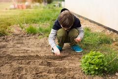 Boy sowing vegetables Stock Photography