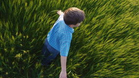 Boy is spinning in a field of wheat and touching the green ears stock footage