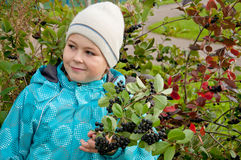 Boy with a sprig of Aronia Royalty Free Stock Photos