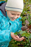 Boy with a sprig of Aronia Stock Photo