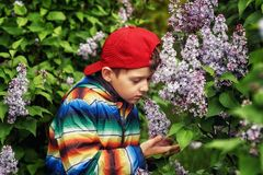 A boy in a spring garden with blooming lilacs . Cute boy in spring garden with blooming lilac . Children`s walks in the fresh air royalty free stock photo