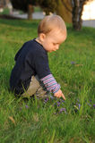 Boy on spring meadow Royalty Free Stock Photography