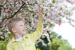 Boy at spring time Stock Photos