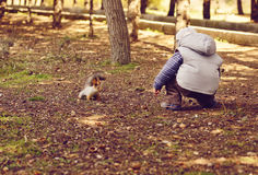 Boy and squirrel Royalty Free Stock Images