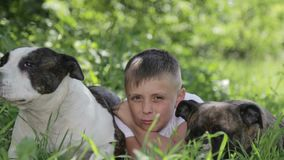 A boy with Staffordshire terriers in the park. Close up portrait of a child with dogs. Pedigree staffordshire with a teenager in nature stock video footage
