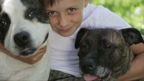 A boy with Staffordshire terriers in the park. Close up portrait of a child with dogs. Pedigree staffordshire with a teenager in nature stock video