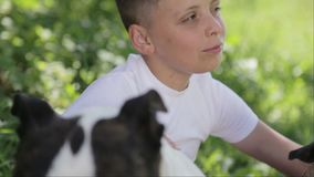 A boy with Staffordshire terriers in the park. Close up portrait of a child with dogs. Pedigree staffordshire with a teenager in nature stock footage