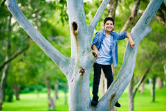 Boy standing on a branch on the tree Stock Image