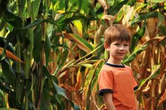 Boy standing in the field of drying corn on a lovely sunny autumn day royalty free stock images