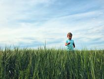 Boy on the field of rye. royalty free stock image